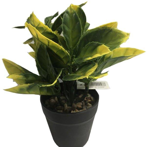 Plastic pot plant
